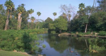 Photograph of Wetlands