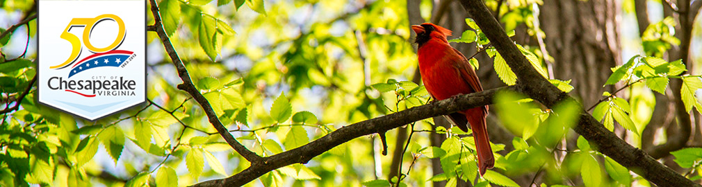 Spring Cardinal in Chesapeake, VA - photo by Joyce Hanni