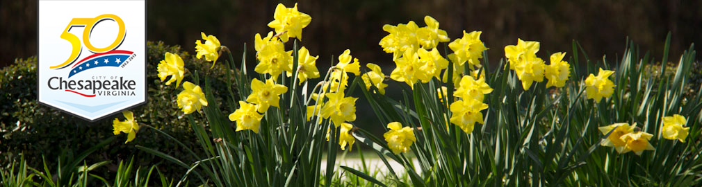 Spring Daffodils in Chesapeake, VA - photo by Joyce Hanni