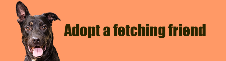 Adoptions - Find a Fetching Friend