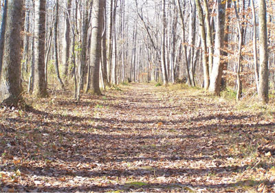 Trail through the woods - photo
