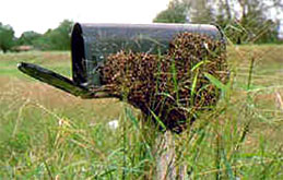 a swarm of honey bees resting on a mailbox