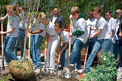group of teens planting a tree